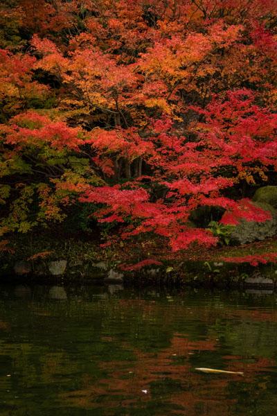 広島の三景園の紅葉